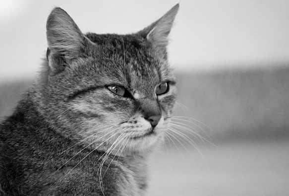 снится умерший кот