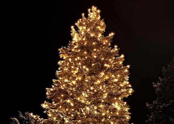 снится новогодняя елка