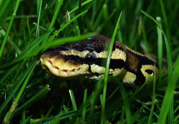 Во сне укусила змея