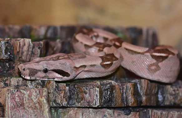 Видеть во сне змею
