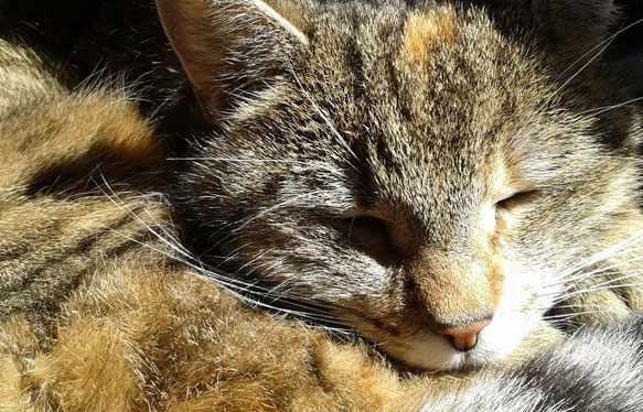 Сон кошек