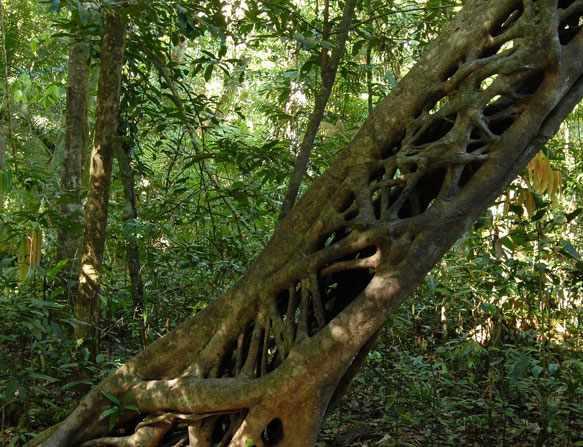 Джунгли во сне