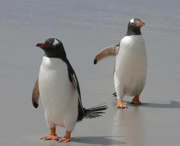 снятся пингвины