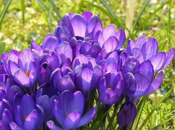 снятся живые цветы