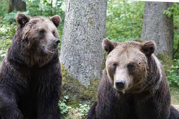 Видеть во сне медведя