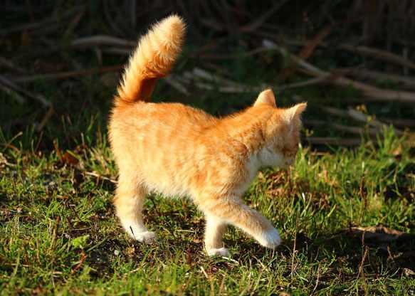 к чему снятся блохи у кошки