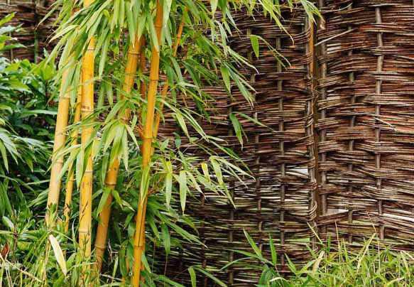Как выбрать одеяло из бамбука