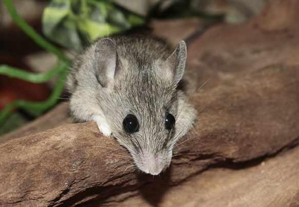 к чему снится мышь во сне
