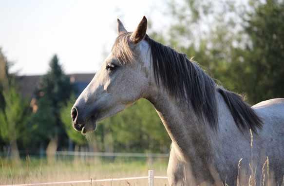Лошадь во сне