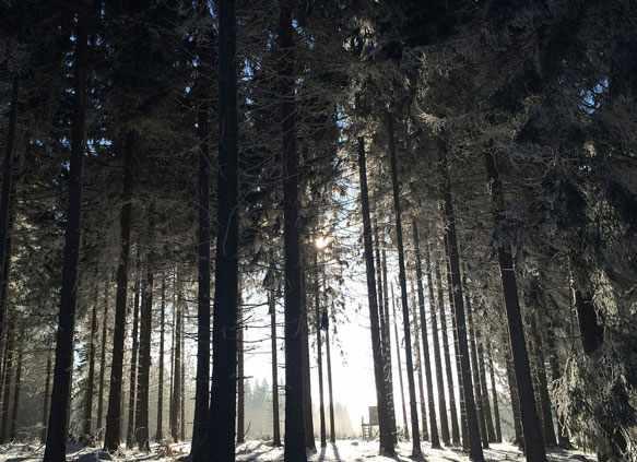 снится лес