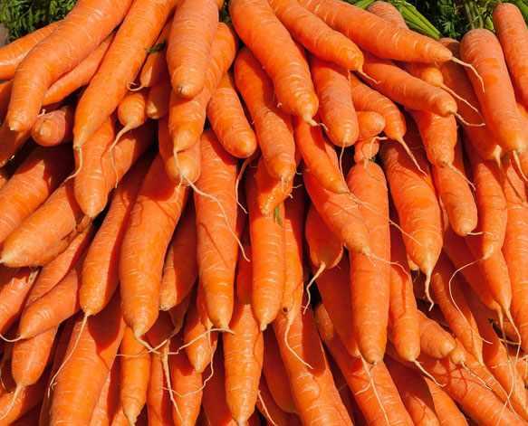Морковь во сне
