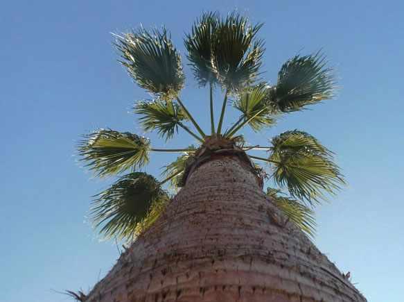 Пальма во сне