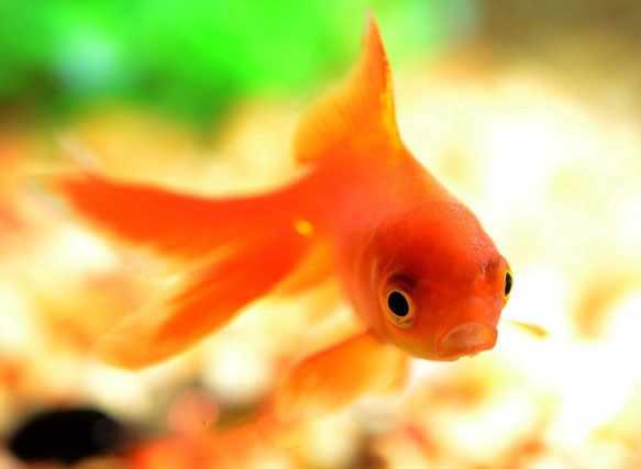 снится рыба женщине