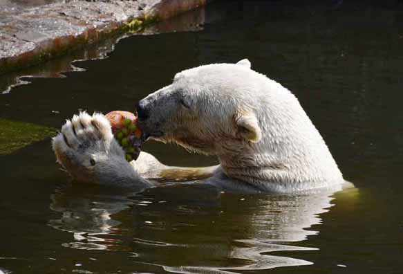 снится белый медведь