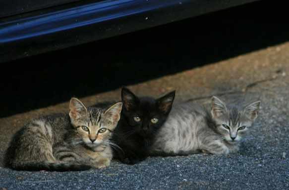 снятся маленькие котята