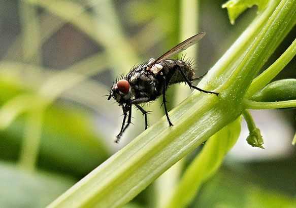 снится муха