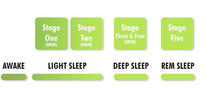 Цикл сна