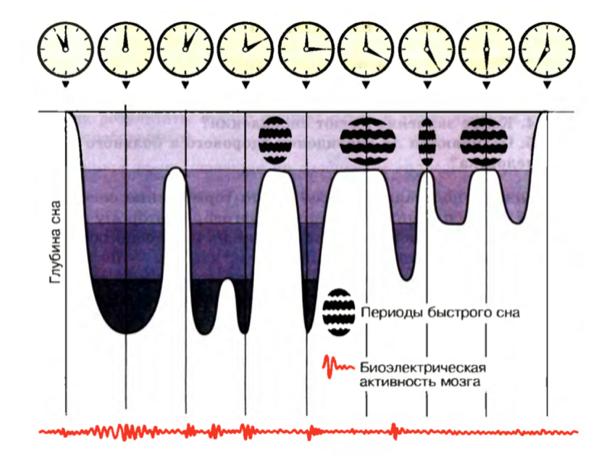 Глубина сна в зависимости от цикла