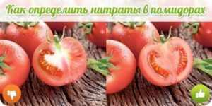 Как определить нитраты в помидорах