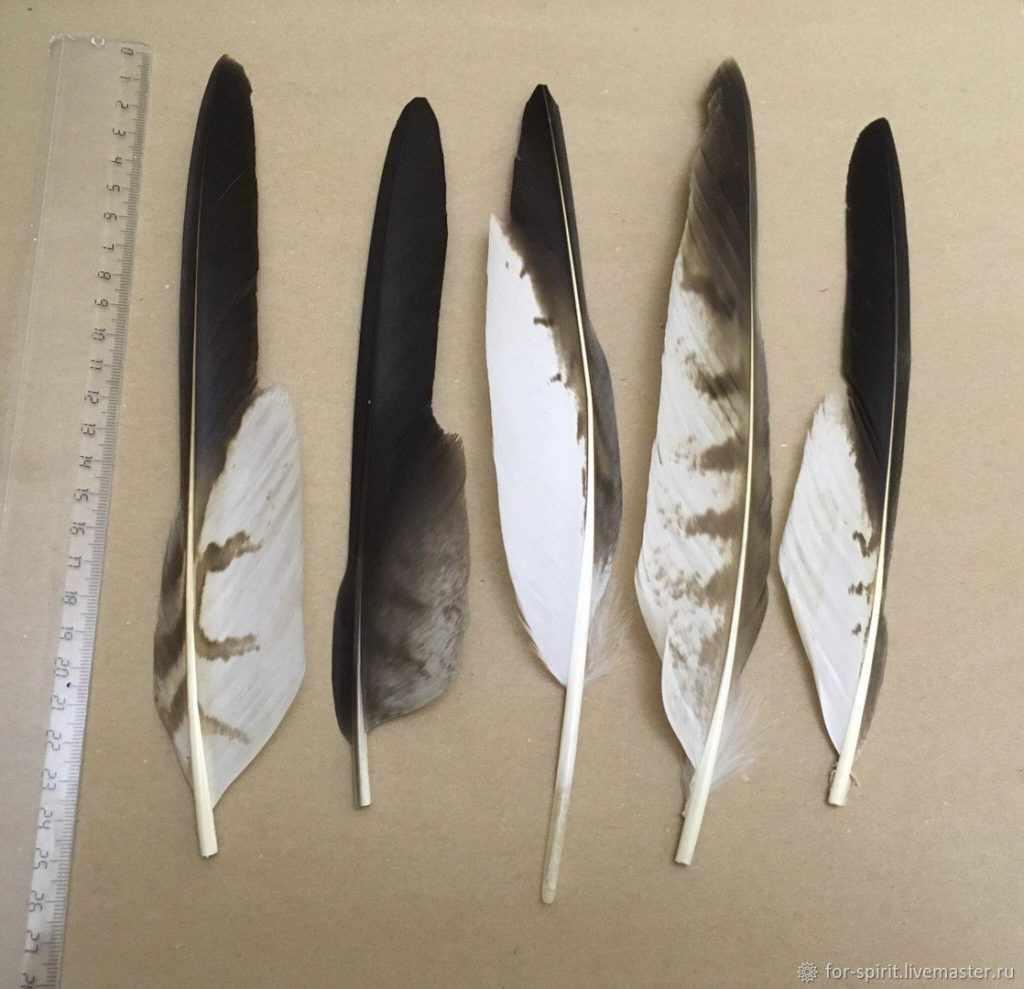 перья орла